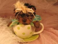 They are absolutely adorable Yorkies puppies. All have