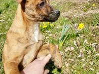 Zilia is an almost 3 month old puppy who is looking for