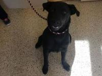 Zing's story Zing is a female/spayed approx 11 mo old