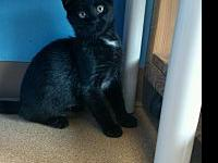 Zini's story Zini is a shy 4 month old looking for her