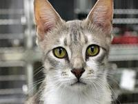 Zinia's story Primary Color: Grey Tabby Secondary