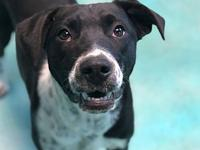 Zippy's story ZIPPY Breed: Pointer & Hound Mix /