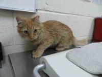 My story Zira is a sweet 5 month old kitten who came to