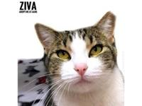 Ziva's story Hi, my name is Ziva! I'm a little lovebug