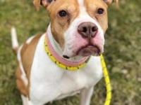 Ziva's story Ziva is a 4 year old Terrier/Boxer mix