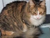 Zoe is one of three cats that was recently surrendered