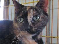 ZOE's story Zoe is a pretty torti girl who's already