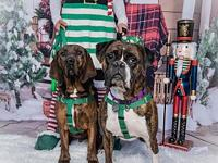Zoee's story I am a 3 year old female Brindle Boxer. I