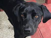 Zoee's story Meet Zoee! She is a lab mix born