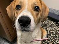 Zoey's story Name: Zoey Age: 2 Years Breed: Beagle Mix