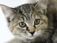 Zoey's story Meow meow! I'm Zoey and I'm ready to