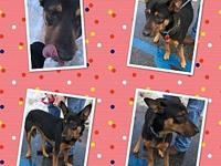 Zoey's story ZOEY IS 3 YEARS OLD, SPAYED, UTD ON SHOTS,