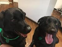 Zoey & Zeke's story You can fill out an adoption