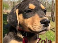 Zola's story Meet one of these adorable lab/hound mix