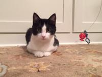 Zoomers is a 6 month old male kitten. He is very sweet