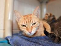 Zora's story - Zora is a laid back and loving little