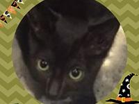 My story Zoro is a cute black kitten with bright green