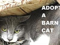 Zoro's story I'm a feral barn cat looking for a home.