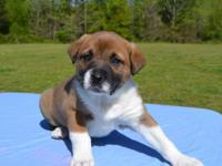 Zorro is a super cutie 6 week old Mixed Breed puppy,