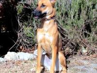 Zowie's story Zowie is a sweet girl that may do best as