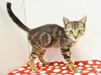 *ZSA ZSA's story Outgoing, loving, and affectionate