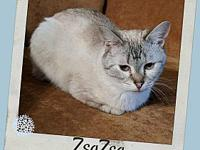 ZSA ZSA's story Zsa Zsa is searching for a loving home.
