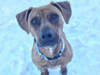 Zues is a male boxer mix and estimated around 5 years