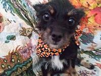 Zuffy's story Zuffy is 7lbs of cuteness! A sweet and