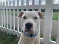 My story Hi my name is Shilling. I am a 1 year old Pit