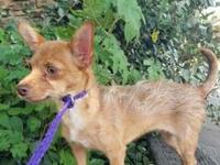 My story Zulilly is a female, 7.8 lb, red and white