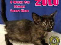 Zulu's story You can fill out an adoption application