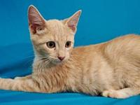 Zuzu's story I'm a playful kitten looking for the