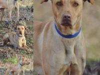 ZuZu needs a family willing to help her be a dog. She