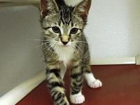 ZYDECO's story Come meet this adorable 3 month old