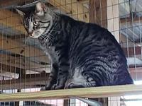 zz-barn cat KHAN's story You can fill out an adoption