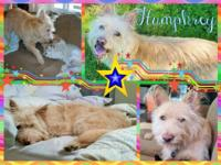****This is a courtesy post for re-homing Humphrey. He